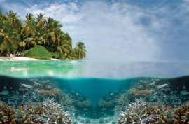 Tubbataha Reef, Palawan