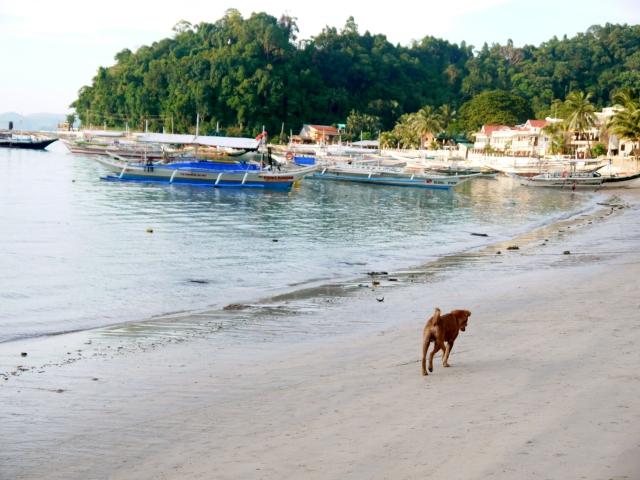 a dog talking its walk along the shore