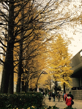 Lovely yellow trees